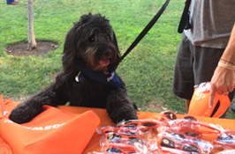 Bring your best friend to one of our live product demos or events