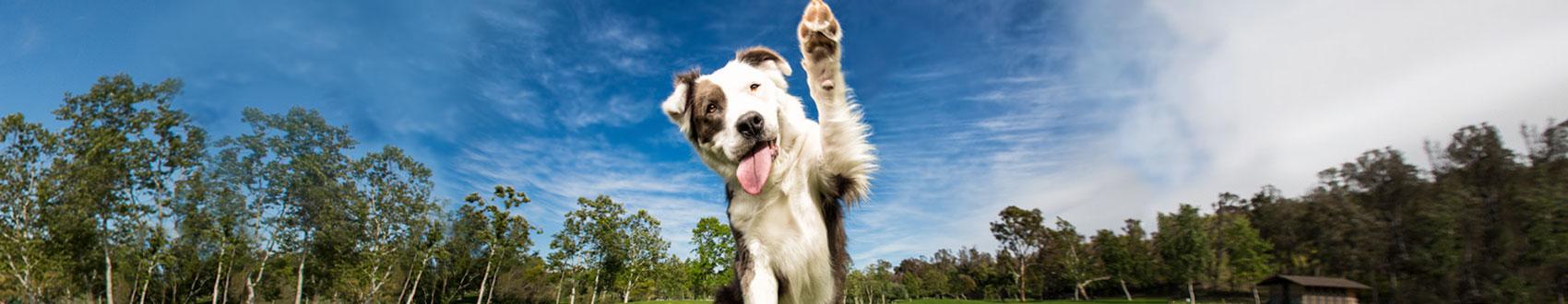 category-healthy-dog-treats