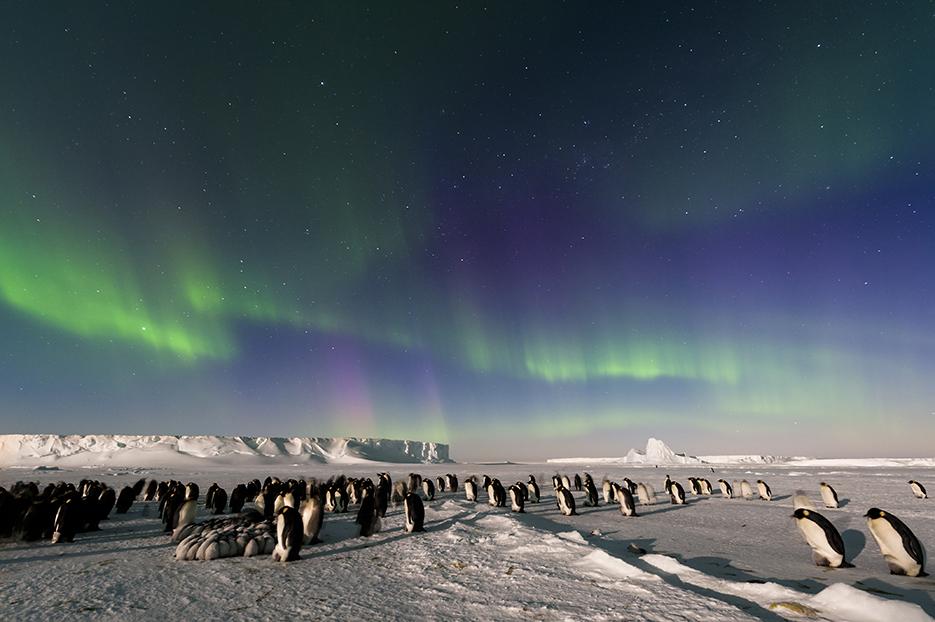 aurora-penguin-stefan-christmann.jpg