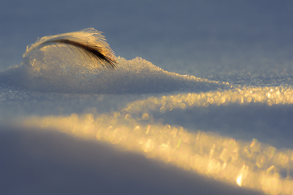 feather-in-ice-stefan-christmann.jpg