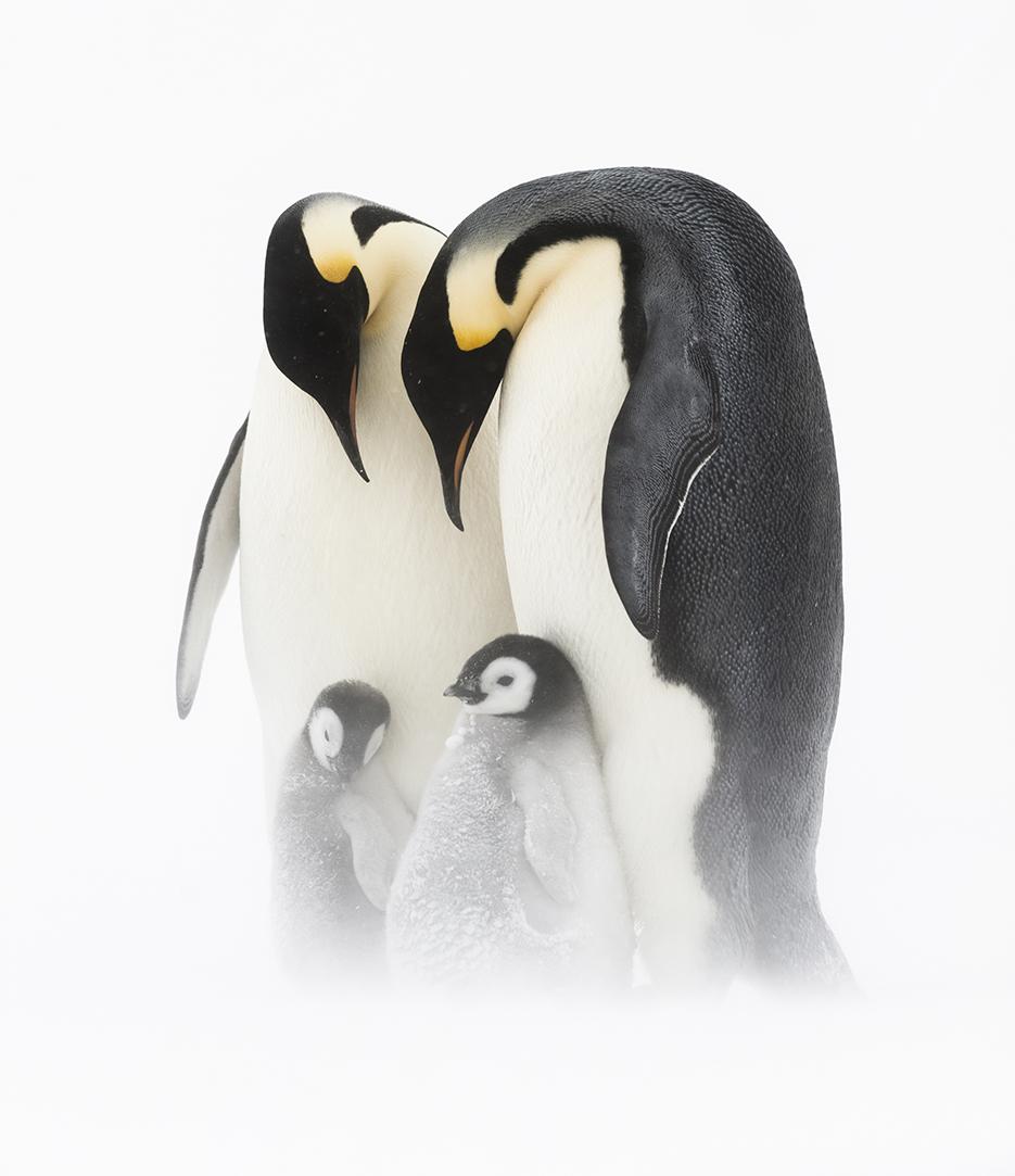 penguin-family-stefan-christman.jpg
